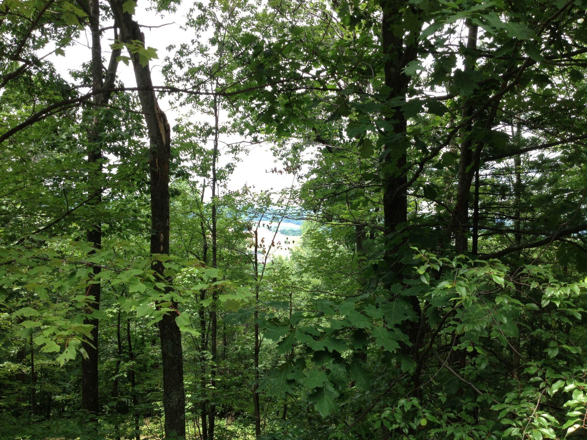 Pennsylvania_forest_-_panoramio1