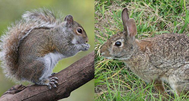 squirrelrabbitdone-630×339