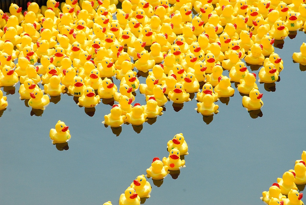 kid-duck-fest-derby_0_1583