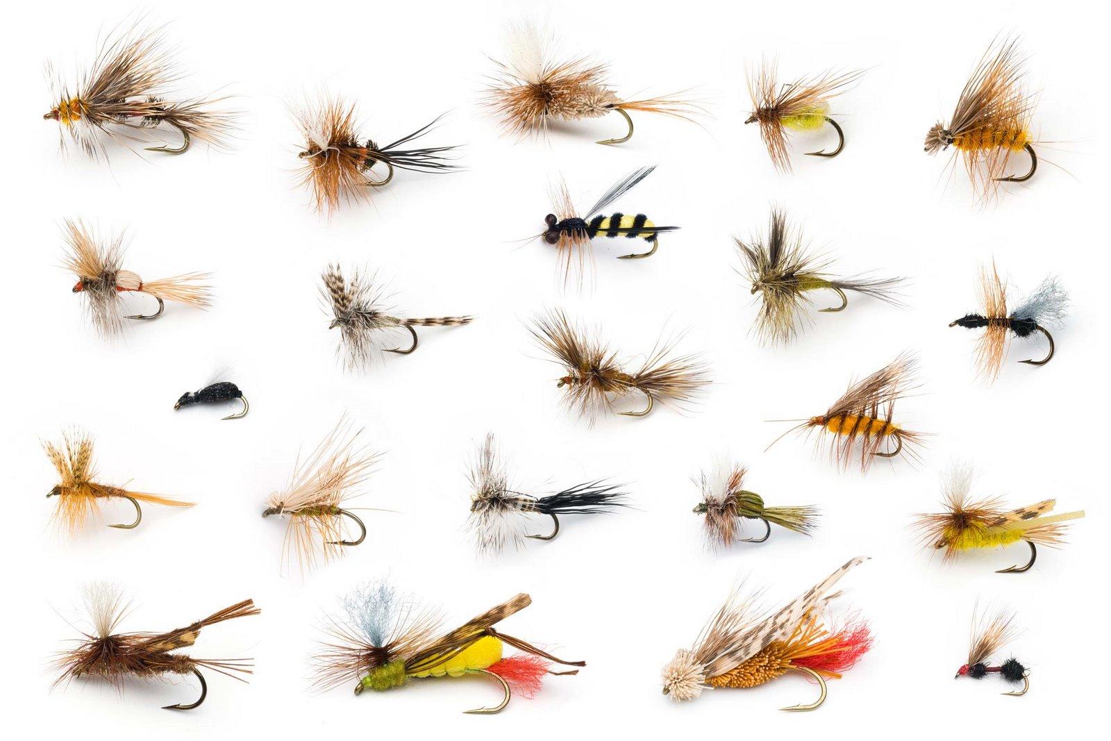 dry_20fliesmay_flies